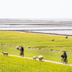 Radtour auf Nordstrand
